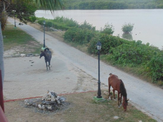 Hotel Colonial Cayo Coco : Horses just below our room