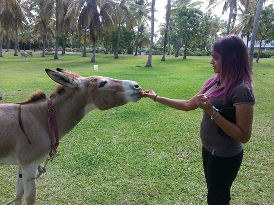 Coconut Bay Beach Resort & Spa : One of the friendly donkeys @ the hotel