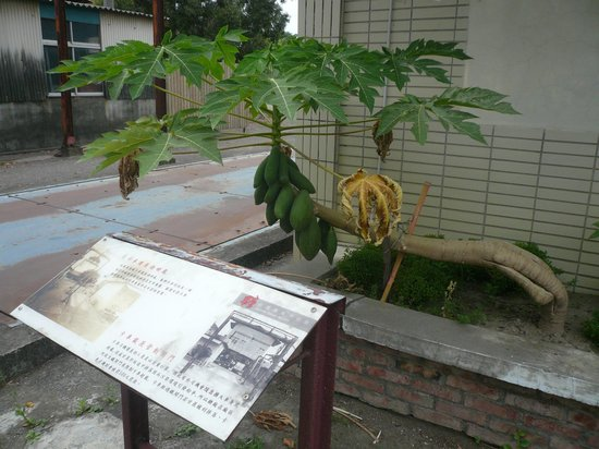 Taiwan Sugar Museum : 今は昔、草木が占領する場所である