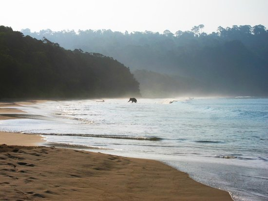 Radhanagar Beach : Elephant on the beach