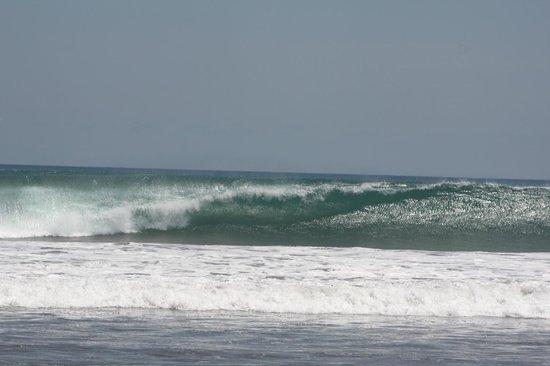 Puri Saron Seminyak : Waves