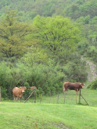 Agriturismo Foglie: Gli animali