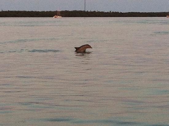Starfish Snorkeling: dolphins