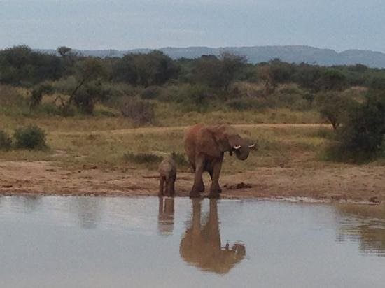 Three Cities Madikwe River Lodge : mommy and baby drinking in the morning