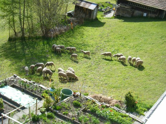 Jungfrau Lodge Swiss Mountain Hotel : お隣の敷地には羊さんが。