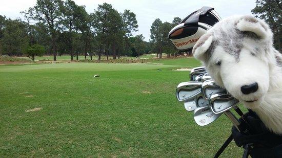 The Manor - Pinehurst Resort: golf