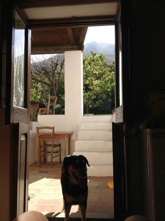 La Lampara Stromboli: giardinetto con vista sul vulcano