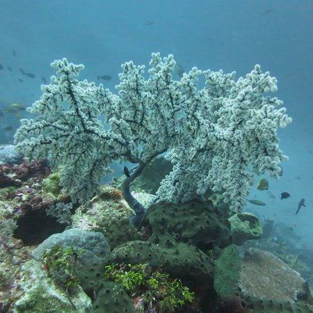 Tomia Scuba Dive: Crystal clear underwater visibility