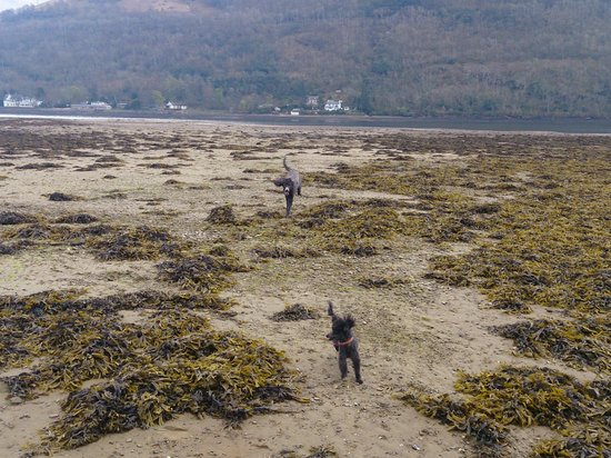 Forest Holidays Ardgartan Argyll, Scotland: Happy poodles
