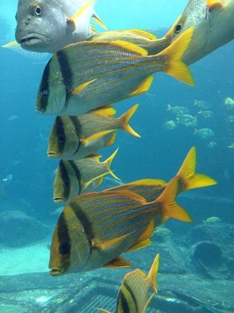 Marine Habitat at Atlantis: Beautiful fish!