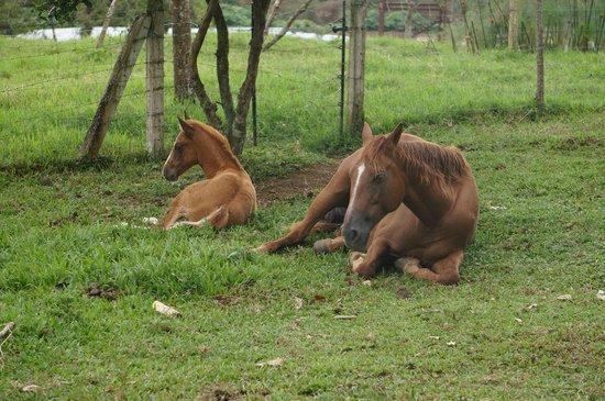 Hotel El Silencio del Campo : Horses
