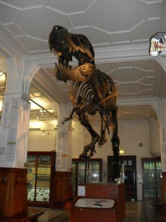 The Manchester Museum: T-Rex