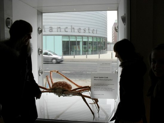 The Manchester Museum: spider