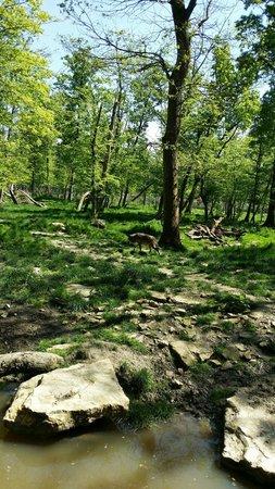 Parc Animalier de Sainte-Croix - Hébergements : Loup noir