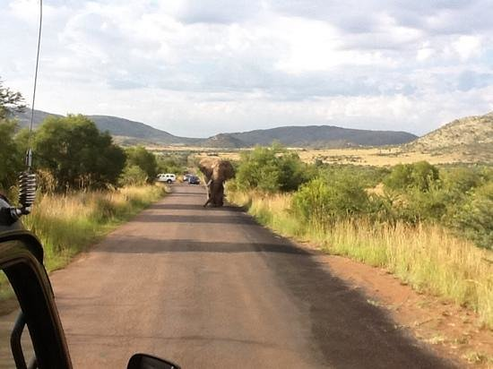 Land of Lotus, Llc: южная Африка