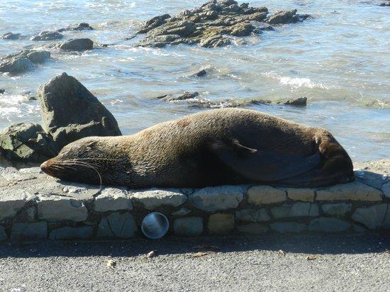 Colonie de phoques : Peninsula Walkway