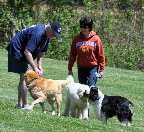 Barkwells, The Dog Lovers' Vacation Retreat : Meeting the other guests