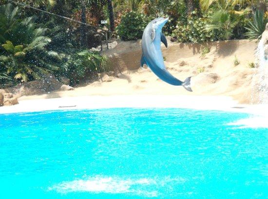 Loro Parque : Brilliant Dolphin Show