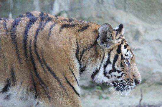 Zoo Schmiding: zoo5