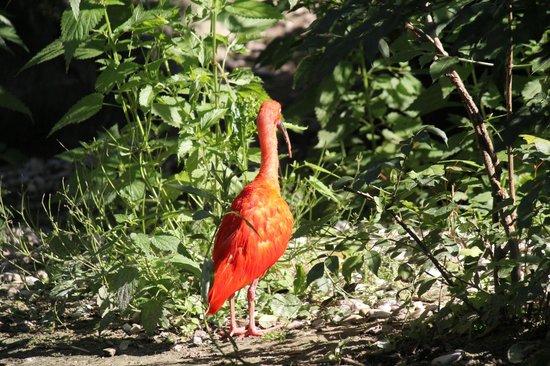Zoo Schmiding: zoo8