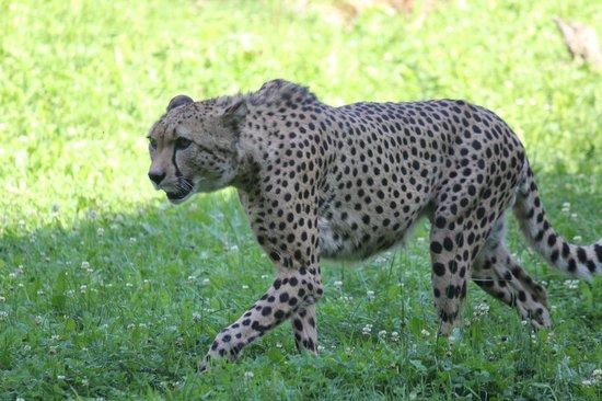 Zoo Schmiding: zoo3