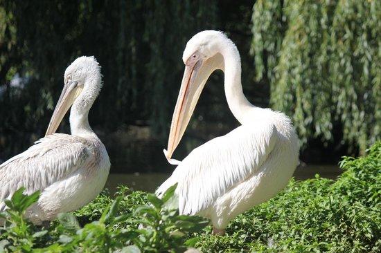 Zoo Schmiding: zoo2