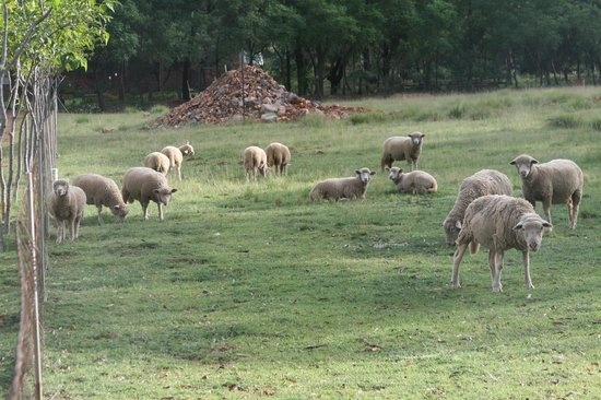 Ekala Guest Farm and Eco Tours : Ekala Farm