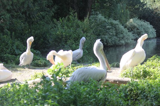 Zoo Schmiding: zoo1