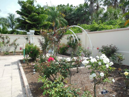 Florida Botanical Gardens: Rose Garden