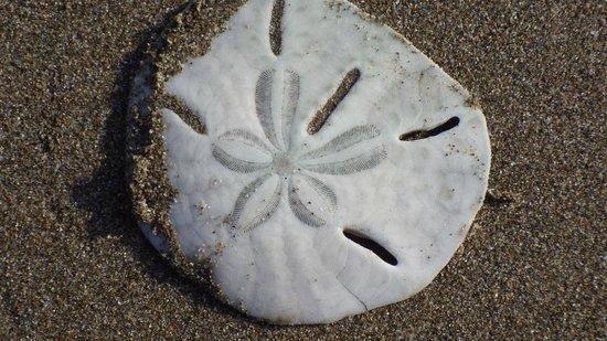 Barceló Montelimar Beach : Coquillage