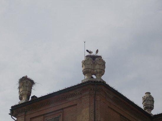 Castello di Racconigi: Le cicogne