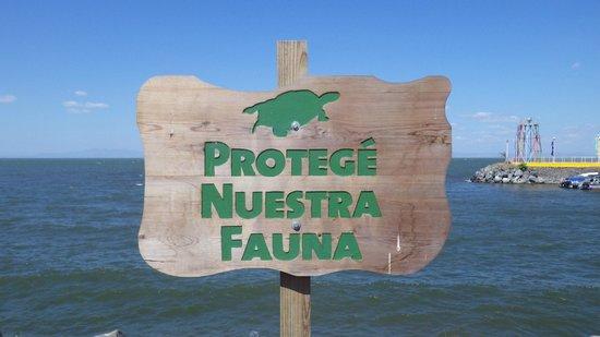 Barcelo Montelimar : Lac Managua