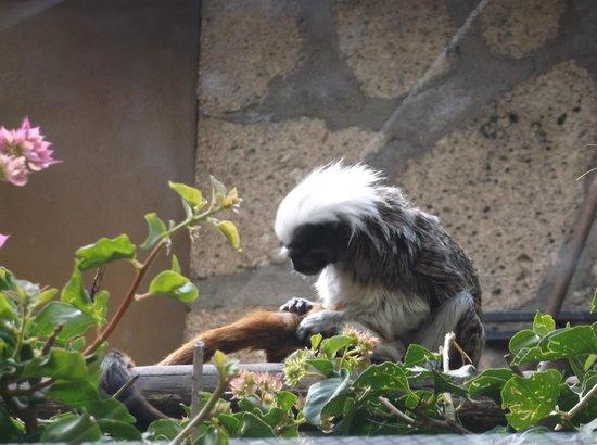 Monkey Park : Lots of Species