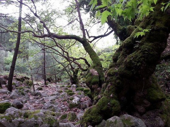 Kalloni, Grecia: Waterfall of Klapados