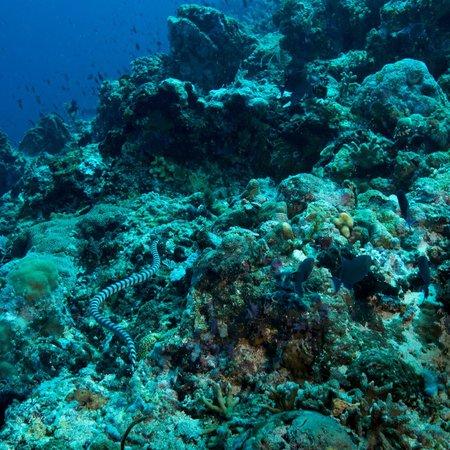 Thalassa PADI Dive Resort: Very nice visibility