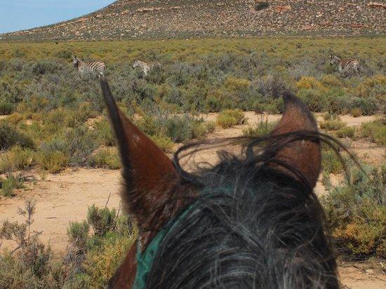 Aquila Private Game Reserve - Day Trip Safari: So close!