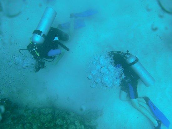 Gypsea Divers: Buceadores en el fondo