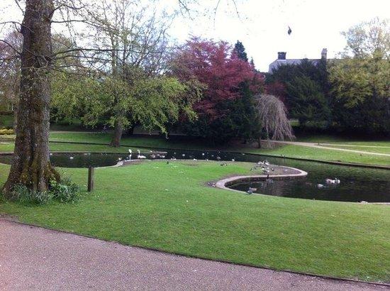 Pavilion Gardens: Ducks in the gardens