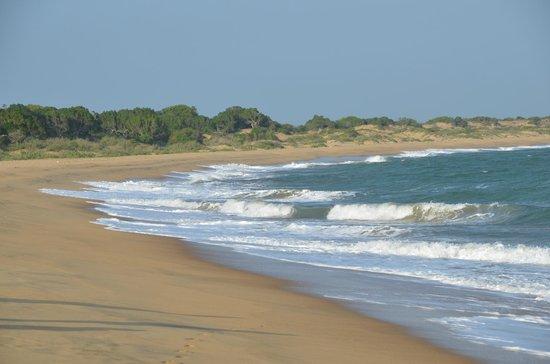 Sun View Beach: Ausflug Yala mit Kalu