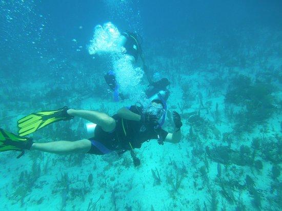 Gypsea Divers: Sólo buceando