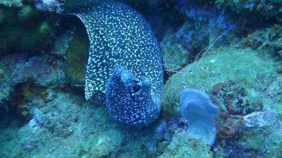 Nature Island Dive Resort: eel