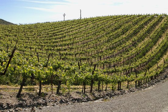 Napa Private Tours