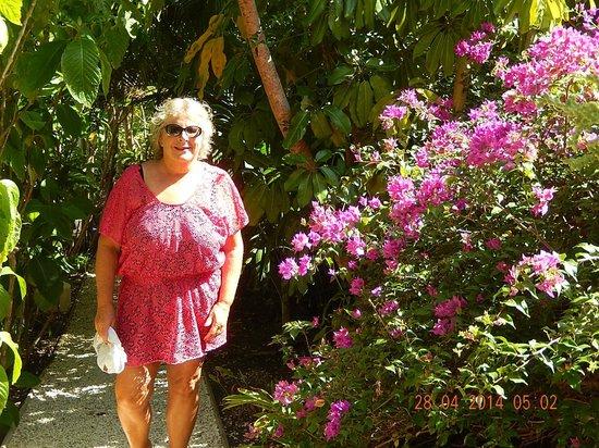 Paddles Snorkel and Kayak Eco Adventure : Flowering Gardens