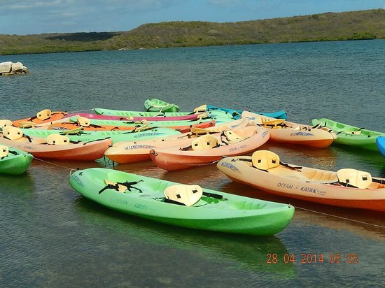 Paddles Snorkel and Kayak Eco Adventure : Eco center Kayaks....plenty