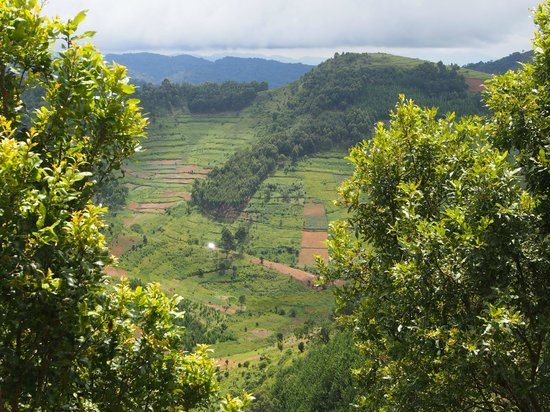 Bakiga Lodge: View of Bwindi Forest from our cottage balcony