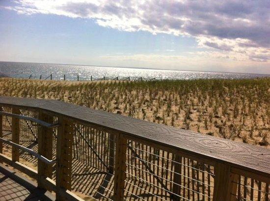 Herring Cove Beach: Beach Grass