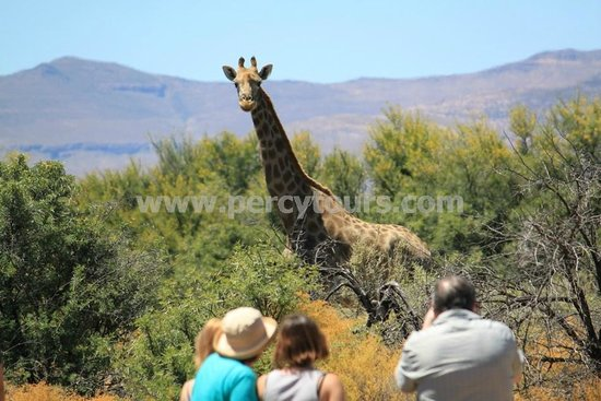 Percy Tours Day Tours: Walking Safari with African animals near Hermanus