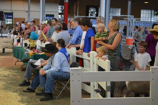 State Fairgrounds Minnesota: Livestock judges and spectators