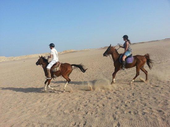 Stella Di Mare Beach Resort & Spa Makadi Bay: Horse riding by the hotel