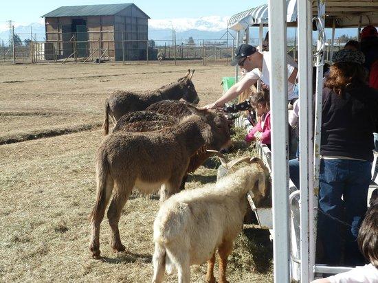 Parque Safari: El el recorrido para ver a los otros animales que no son los Leones